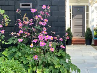 HEDGE Garden Design & Nursery, Wellington