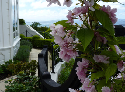 Flowering cherry columns for a bit of privacy & elegance