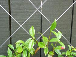 Espalier wirework detail
