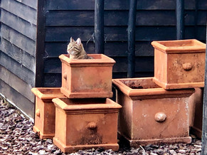 Old terracotta pots - why do cats love boxes?