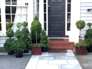 Topiaries on display at the front door