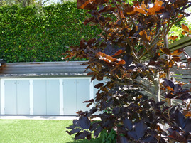 Copper beech leaves against outdoor storage shed