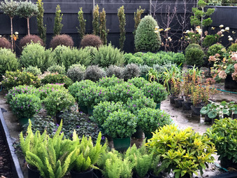 Plant nursery in the heart of Wellington!
