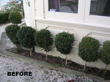 Before the garden renovations