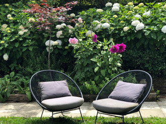 Black outdoor chairs in front of dahlias