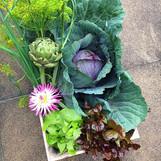 Produce from Hadley's garden