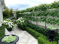 Formal garden design Wellington.jpg