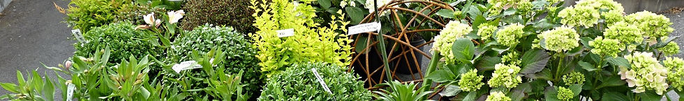 Plants for sale over the internet & freight rates