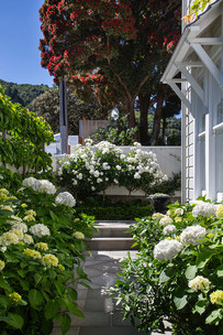 Thorndon Garden Wellington | HEDGE Garden Design & Nursery
