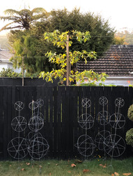 Pleached trees & ivy topiard frames