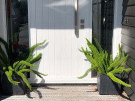 Front door pots with Foxtail Ferns