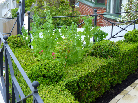 We re-used the old topiaries