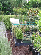 Nursery flats crammed with pots of baby trees and groundcovers
