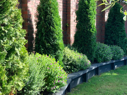 Conifer columns & mixed balls line the curved brick wall around lawn