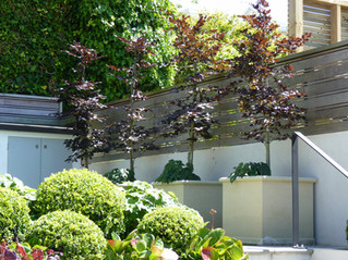 Privacy planting ideas for small city gardens