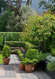 Formal garden with topiaries, flowering cherries & layered hedges