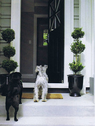 Knock knock anyone home? Topiaries at the front door