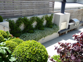 Outdoor BBQ, fire place & feature planting espaliered Chinese Star Jasmines