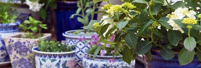 Pots, terraces & balcony gardens