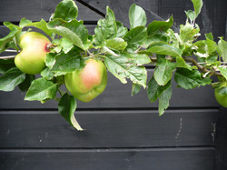 Our edible & vege gardens