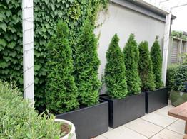 Great plants in pots