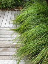 Boardwalk & grasses