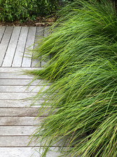 Boardwalk & grasses