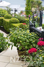 Buxus hedge, black fencework & pink hydrangeas