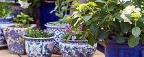 Garden design for pots, planters, balconies & apartments
