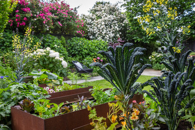 Corten vegetable planters & Cavolo nero
