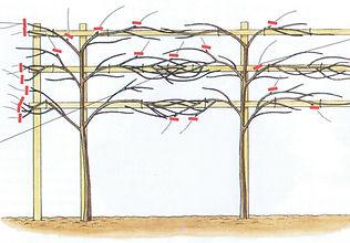 1. Pleached Trees.jpg