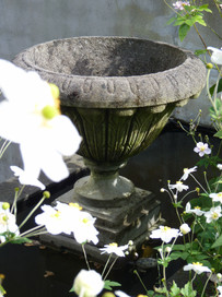 Concrete urn softened by Japanese Anemones
