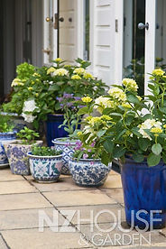 Beautiful blue & white pots, filled with white flowering hydrangeas, herbs & veggies