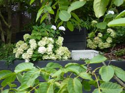 Green & white garden backdrop
