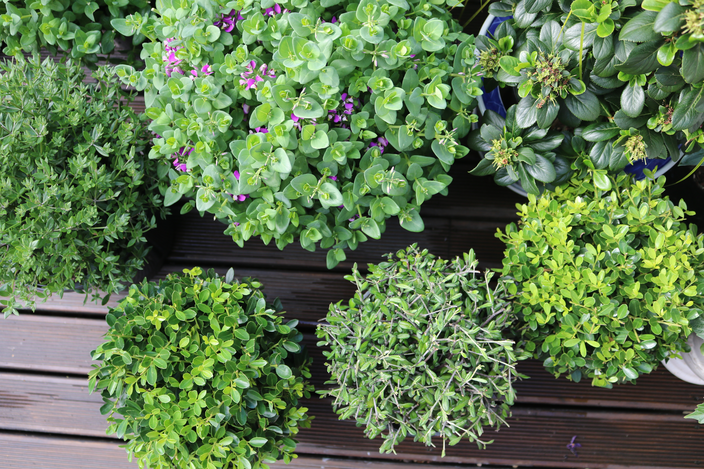 Beautiful topiary