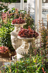 Inspirational planting combination, stone urns & succulents