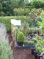 Small plant nursery in the city
