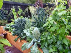 Broccoli Cavolo nero Brussel sprouts