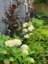 Karori, Wellington | HEDGE Garden Design & Nursery
