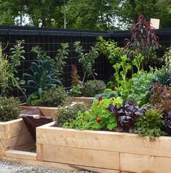 An organic vegetable garden in a small space, Wellington