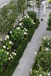 Green & white formal garden in Thorndon