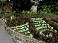 Garden design awards for designing with plants