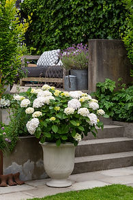 White hydrangea classic urn