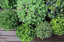 HEDGE garden design, topiary & plants for sale, Wellington