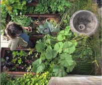 Hadley in her vegetable garden