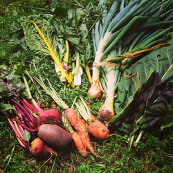 Healthy Veggie Harvest