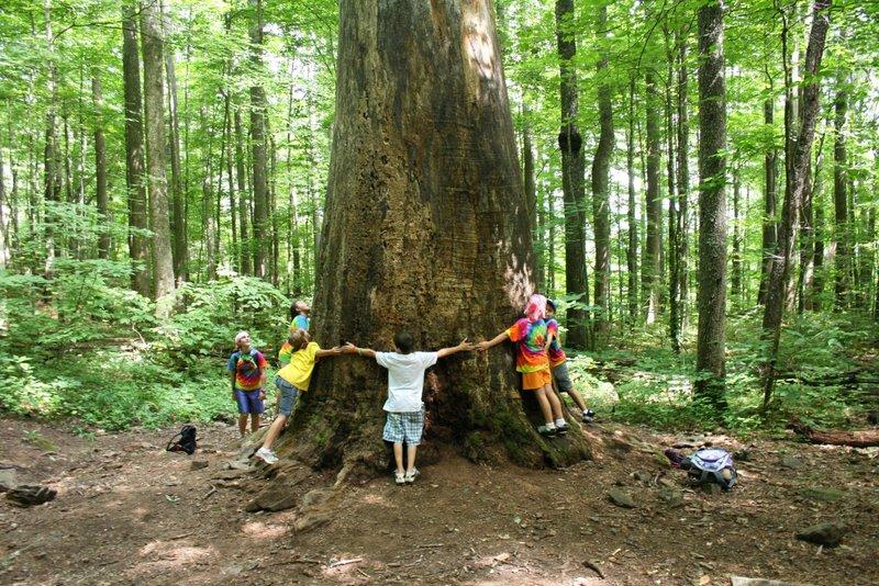 Tree Huggers :)