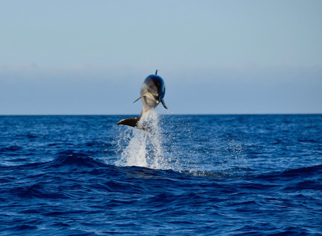 Dolphin Fiesta.