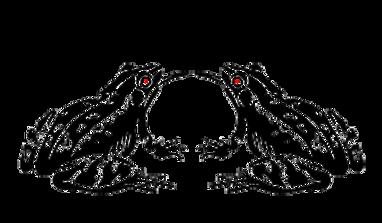 en-tete-grenouille-noir.png