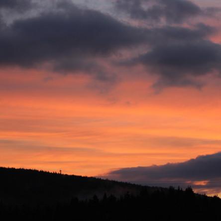 Sunset Borderforest
